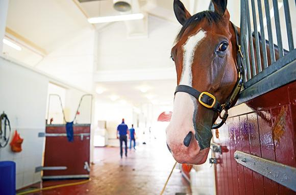 An exclusive tour of Godolphin, Dubai's winning stables