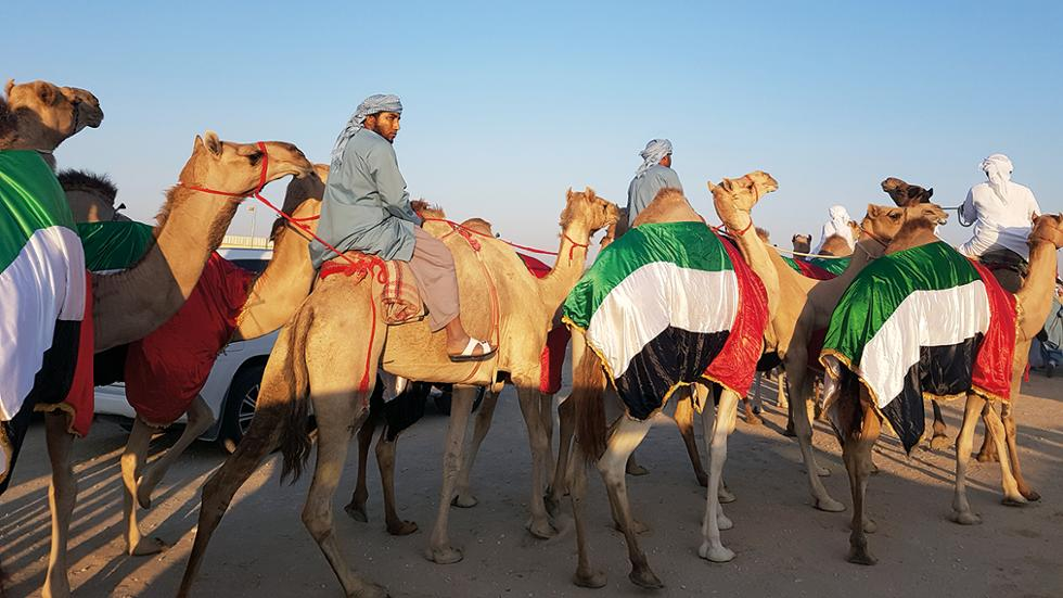 Inside The Uae S Camel Beauty Contests Friday Magazine
